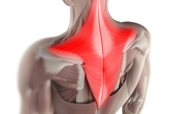 Trapezius - Muscle of the Month (Feb)